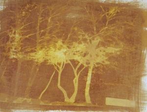 Trees SSI trans.Neg web