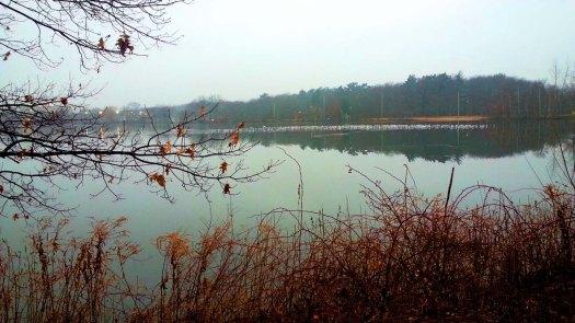 Lake Q. Week 1