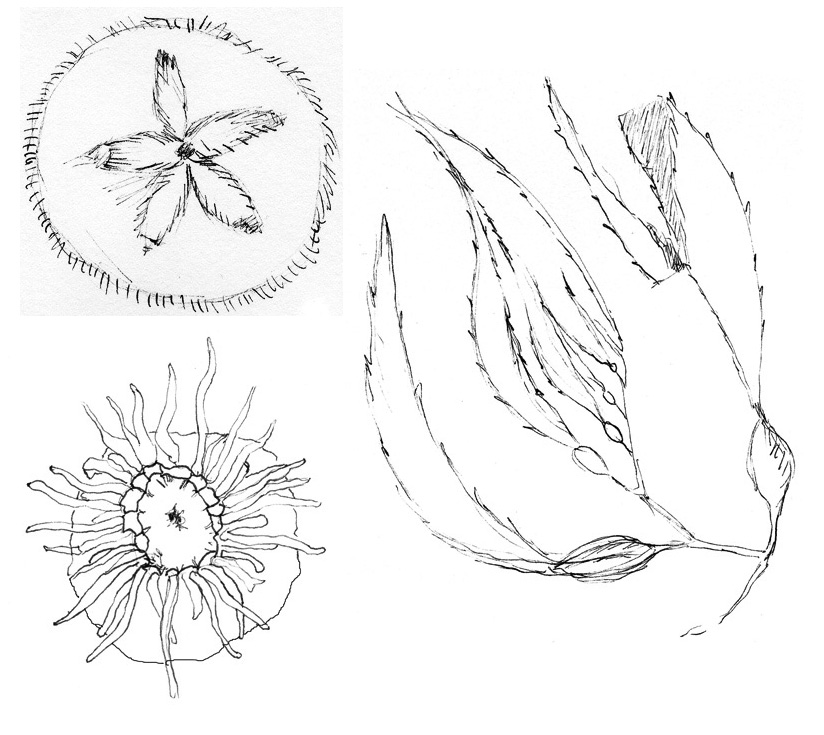 3 drawings