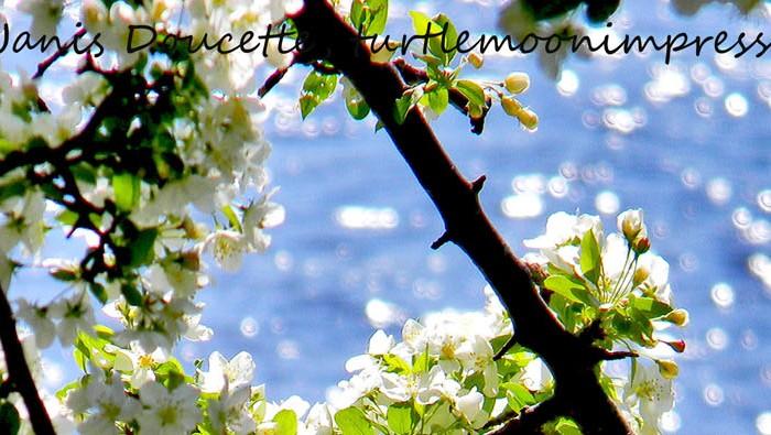 Spring Blossoms On TheLake