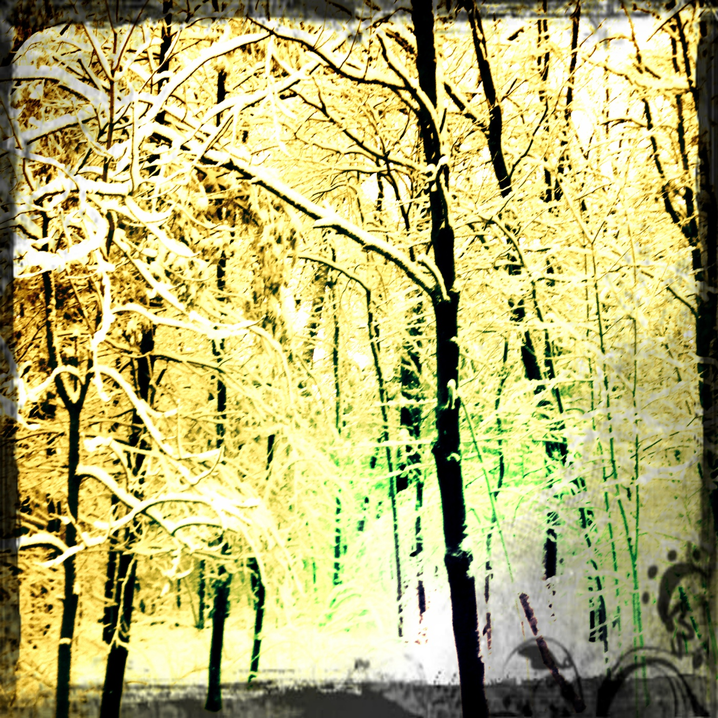 Snow Trees Anne