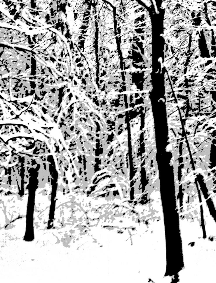 Snow Trees W3post