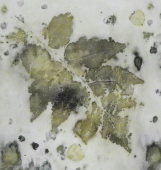 golden-rain-tree-leaf-web