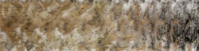 tiarella-cordifolia-foamflower-web