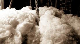 Cotton.Sepia