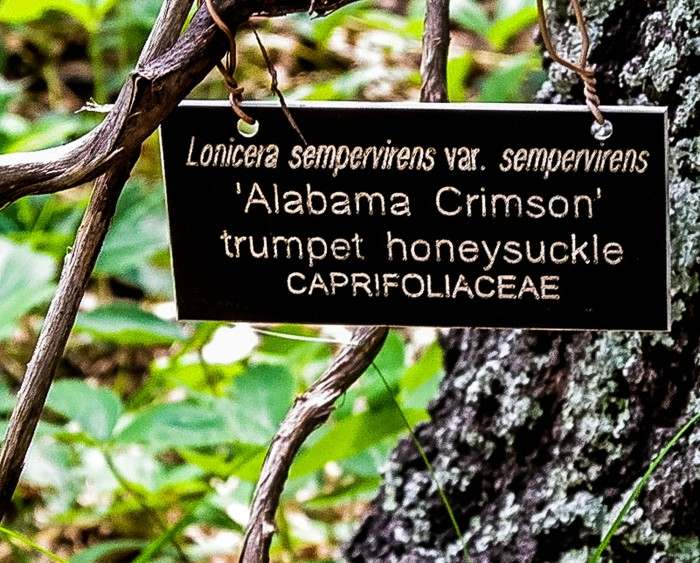 Alabama Crimson trumpet honeysuckle. signage