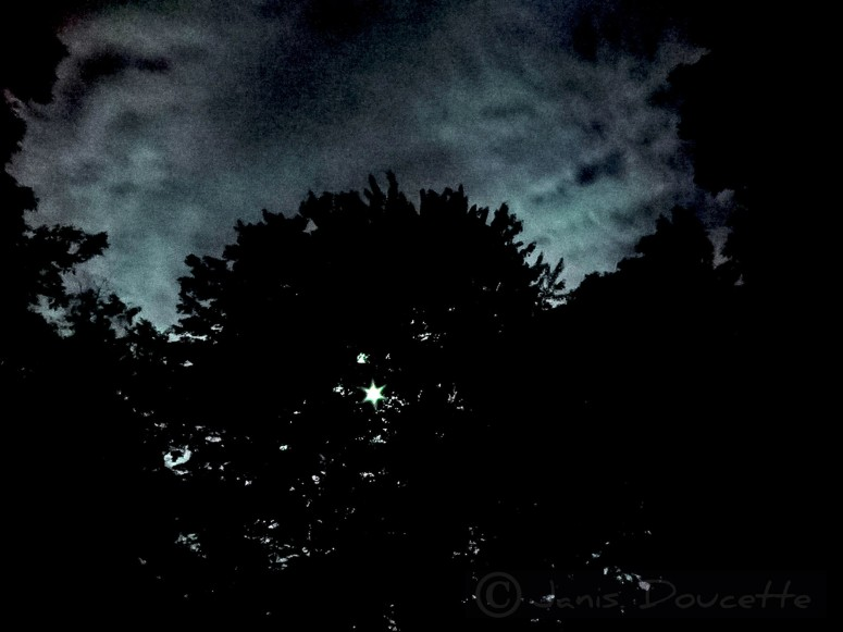 Waiting For the Moon To Clear the Trees.C.