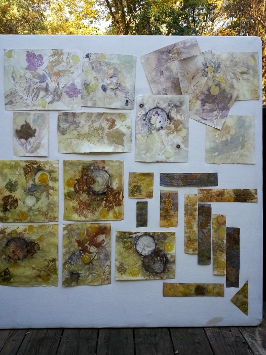 Eco prints on paper 17