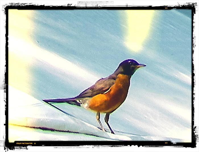 Robin10