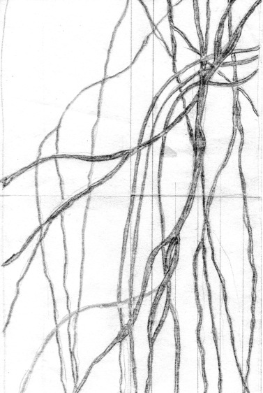 Willow Tree Sketch